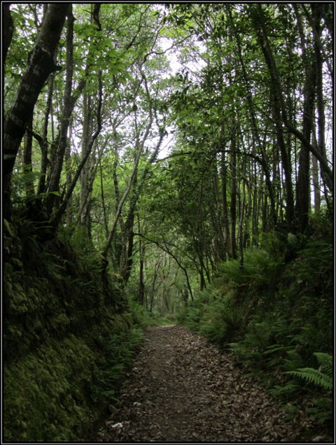 Девок заманили в лес