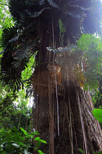 botanic25