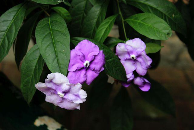 botanic48