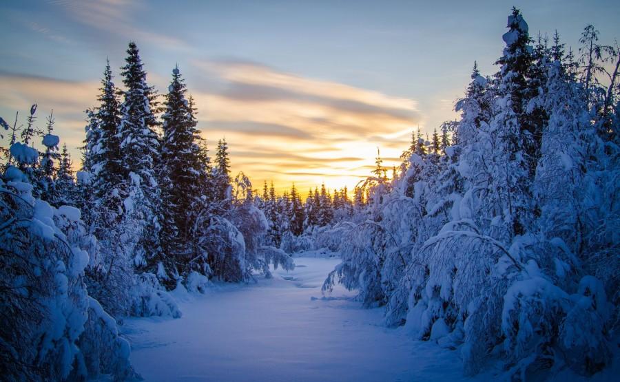 2400x1480_utro-les-zima-elki-sneg